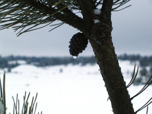 winter-details-1401117-1280x960