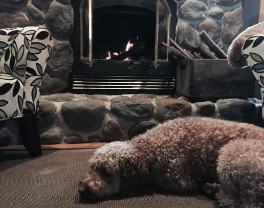 Pup & fire